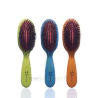 Cartel Brosse Cheveux Pneumatique Sanglier Médium à TOUCY